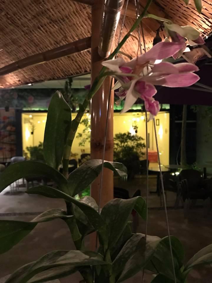 Sang quán caffe sân vườn K+, khuôn viên rộng 500m2, 45 Cao Lỗ, P4, quận 8.